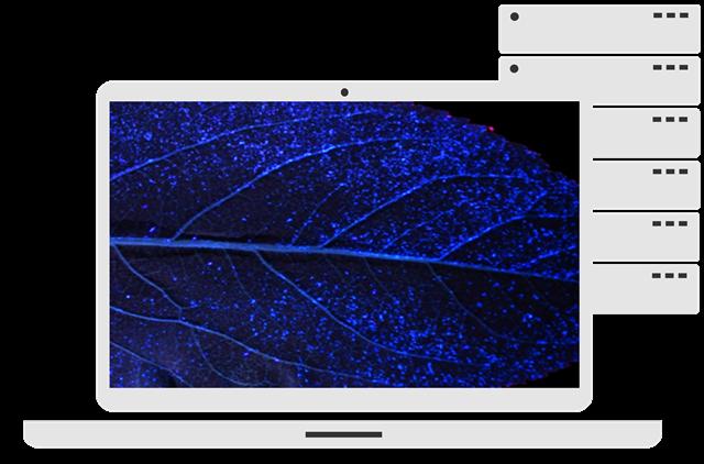 PC mit Blatt-Symbol